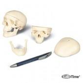 Модель мини-черепа, 3 части