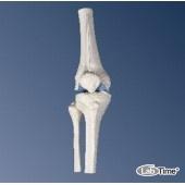 Мини-модель коленного сустава