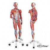Фигура с мышцами, двуполая, 45 частей