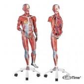 Фигура с мышцами, женская, 23 части