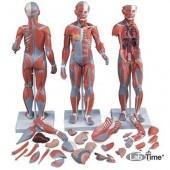 Цельная фигура с мышцами, женская, 21 часть