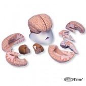 Модель мозга, 8 частей