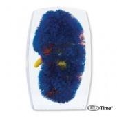 Модель почечных сосудов красно-желто-голубая