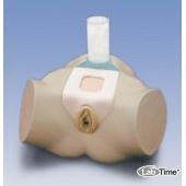 Тренажер для уретральной и надлобковой катетеризации женщины