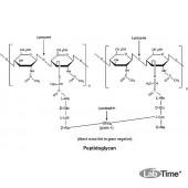 Лизоцим, куринный яичный белок, 25 г (Alfa)